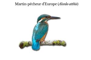 martin-pecheur-2