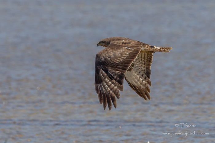 Buse variable-Capestang 29/30/31.05.2015
