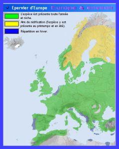 Epervier dEurope