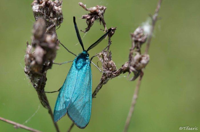 Turquoise (adscita) 3