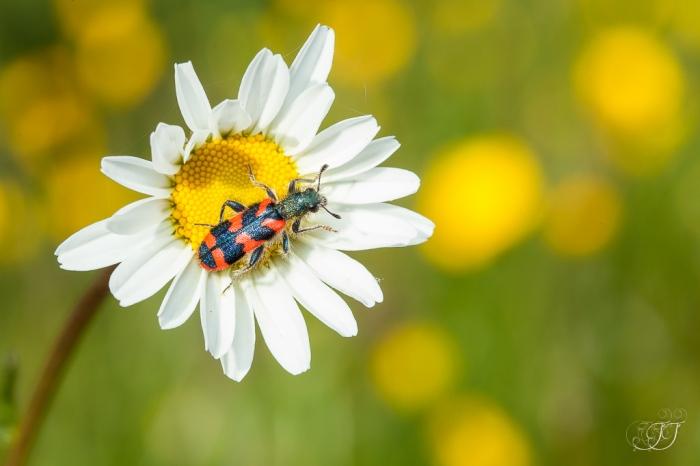 Clairon des ruches-Domaine des oiseaux 29.04.2016