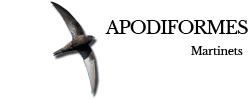 apodiformes