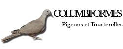 columbiformes