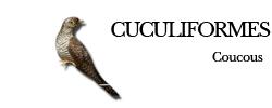cuculiformes