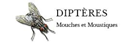 dipteres