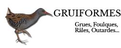 gruiformes