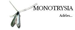 monotrysia