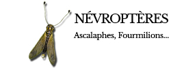 nevropteres