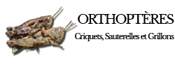 orthopteres