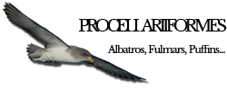 procellariiformes
