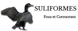 suliformes